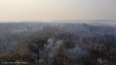 Activan alerta epidemiológica por incendios forestales