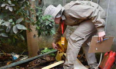 Minga Guazú con alarmante índice de infestación larvaria