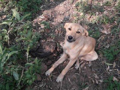 En grupo de WhatsApp se organizaron para encontrarle hogar a un perrito abandonado