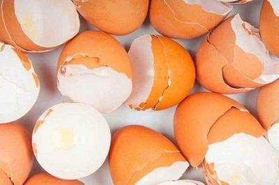 "Cáscara de huevo o espinaca como  ""andamios"" de tejidos en trasplantes"