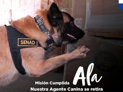 Ala, la agente canina de la Senad, se jubila tras nueve años de trabajo