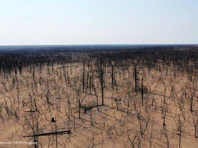 Riesgo de incendio persiste  y  suman 241.299 ha. quemadas