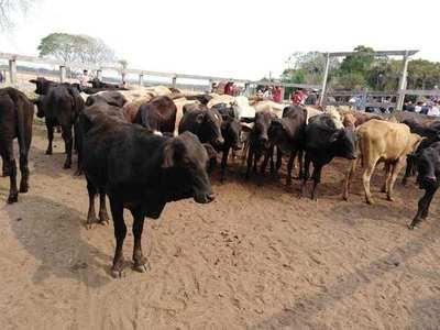 ENTREGA DE 82 ANIMALES A PRODUCTORES DE SAN PEDRO DEL PNÁ.