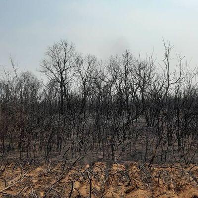 Pronóstico nada alentador para el Chaco paraguayo