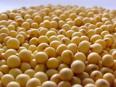 Más soja de EE.UU. fue adquirida por China