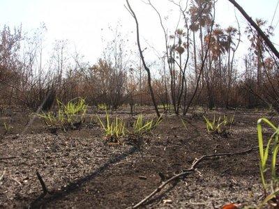 El Chaco tardará 6 años en recuperarse de incendios forestales