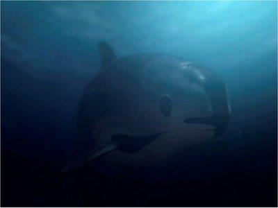 La vaquita marina, a punto de extinguirse, víctima de mafias
