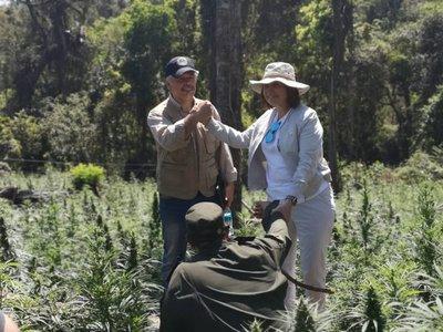 Paraguay y Argentina destruyen 100 hectáreas de marihuana en reserva