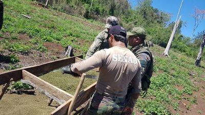 Aseguran que droga incautada en la Argentina ingresa desde Itapúa