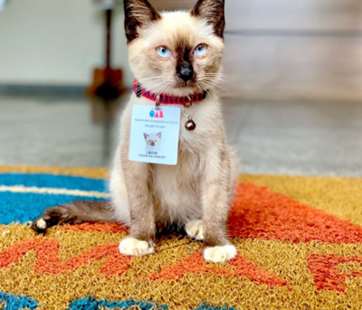 La inaudita historia del gatito callejero que se convirtió en abogado
