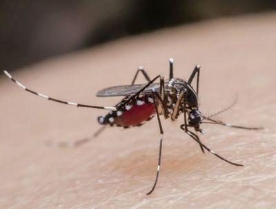 Aunque disminuidas, enfermedades transmitidas por mosquitos siguen circulando