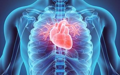 Día Mundial del Corazón: consejos para prevenir enfermedades cardiovasculares