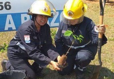 Bomberos fomentan la reforestación