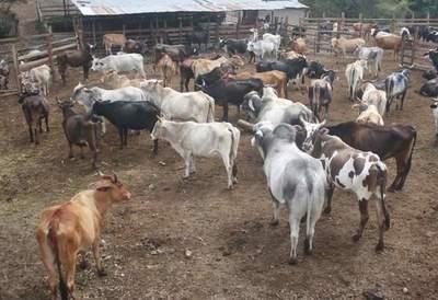 Bajo precio de la carne suma un problema más a la ganadería paraguaya