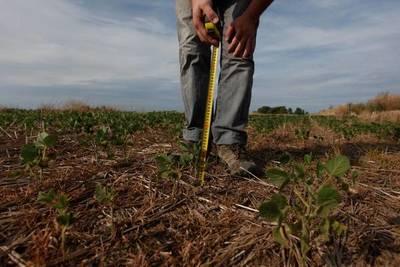 El 90% del país está sin humedad para sembrar