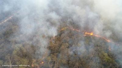 Incendio consumió más de 300 mil hectáreas en el Chaco, según Infona