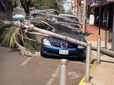 Lujoso automóvil fue alcanzado por una palmera que se cayó