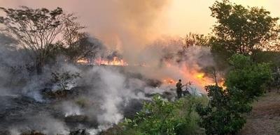 11 imágenes de la devastación en el Parque Guasu