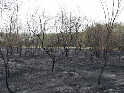 Biólogos analizarán pérdida de biodiversidad en Parque Guasu