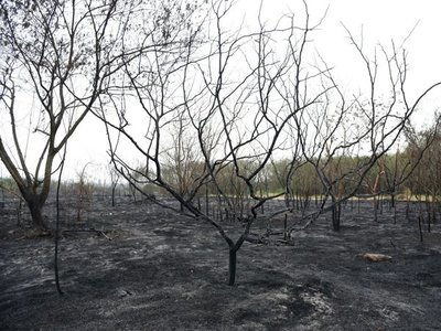 Casi 20% del Parque Guasu quedó reducido a cenizas