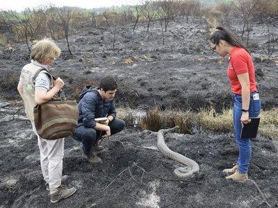 Kuriju rescatada en el Parque Guasu sigue en estado delicado