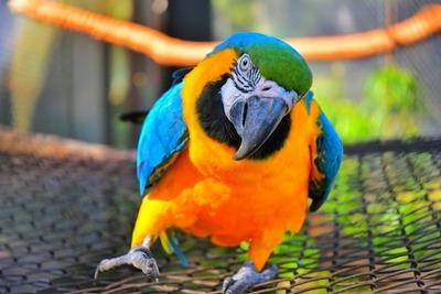 ITAIPU celebra el Día Mundial de los Animales con acciones de conservación de especies silvestres.