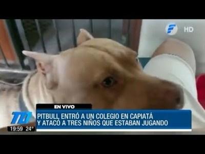 Pitbull atacó a tres niños en una escuela