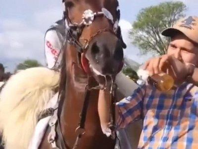 Vídeo: emborracharon a un caballo y ahora los buscan