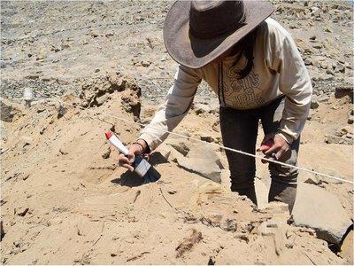 Descubren restos de un perro enterrado hace 1.000 años