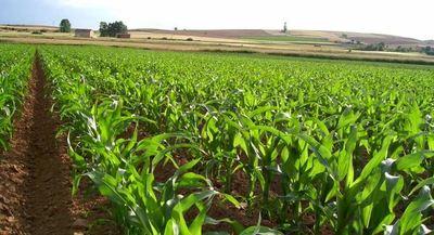 Sector agrícola recibió 10% más de financiamiento en agosto
