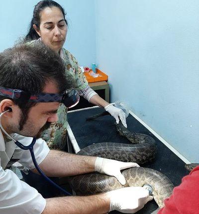 Murieron dos reptiles rescatados tras los incendios en Parque Guasu