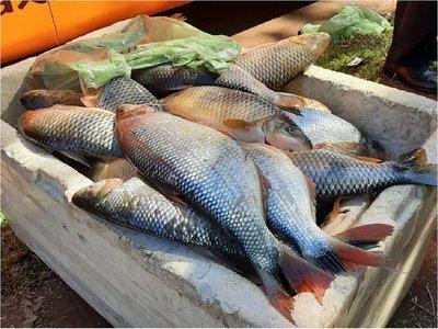 Decomisan alrededor de 200 kilos de pescados a turistas brasileños