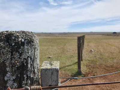 Valor de la tierra en Uruguay promedia US$ 3.756 por hectárea