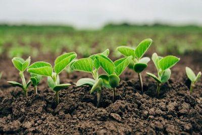 Paraguay sigue en la vanguardia en implementación de biotecnología