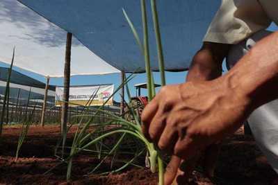 Las lluvias generan «suspiro optimista» en el sector productivo