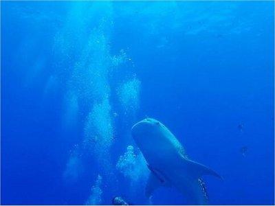 Pérdida de biodiversidad es más rápida en hábitat marino