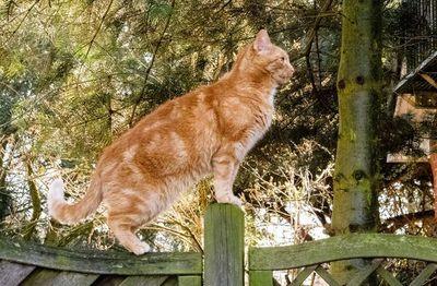 Peligro en el jardín: Cómo proteger a los gatos de accidentes