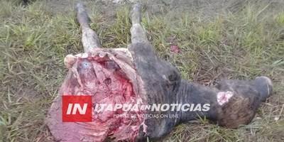 ABIGEOS ATACARON ESTABLECIMIENTO EN OBLIGADO KM 28