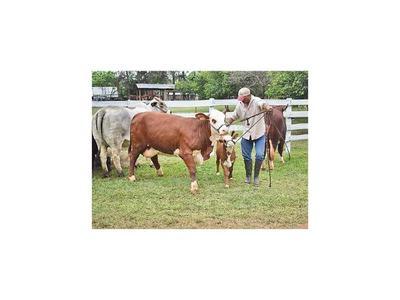 En Expo Guairá, ganaderos venden por USD 600.000