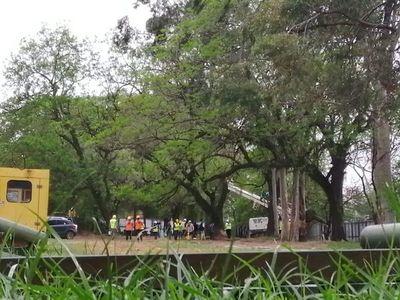 Comenzó la tala de árboles en el Jardín Botánico