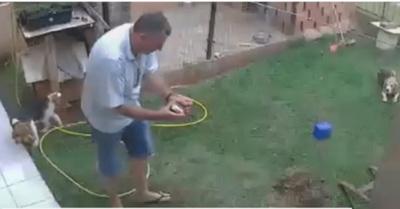 Por hormigas quemó su jardín