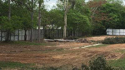 Construcción de Corredor Vial Botánico 'es inconstitucional', según activista