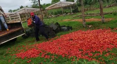 """HOY / Productores se deshacen de sus tomates: """"Ehechapa, karai Marito"""""""