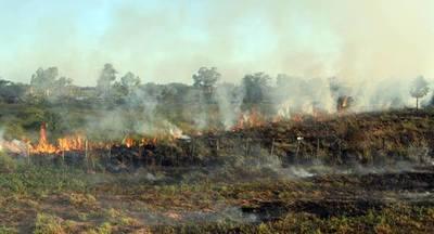 BNF habilita créditos para productores afectados por incendios