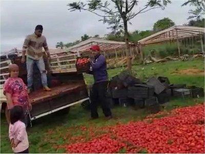 Productores se ven obligados a tirar tomates a causa del contrabando