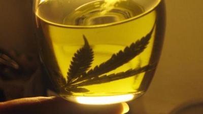 Condenan a cinco años de prisión a joven que produjo aceite de cannabis