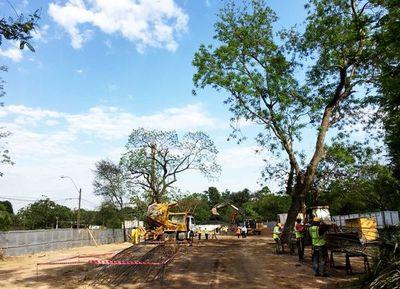 Ayer trasplantaron seis árboles