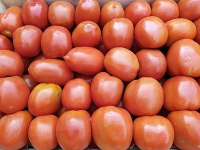 Feria de tomates será mañana lunes y el martes