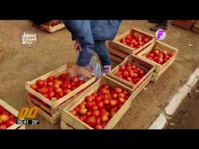 Tomateros acuerdan venta con supermercados