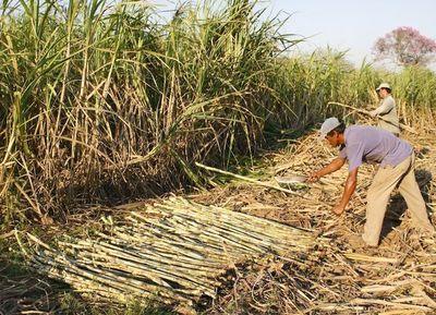 Lanzaron el Programa Nacional de Caña de Azúcar 2019-2023